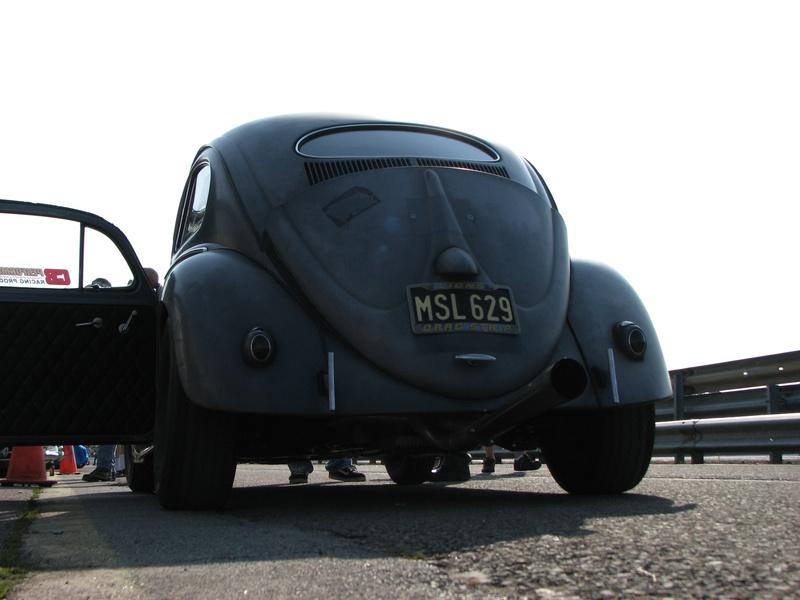 European Bug In IMG_0018